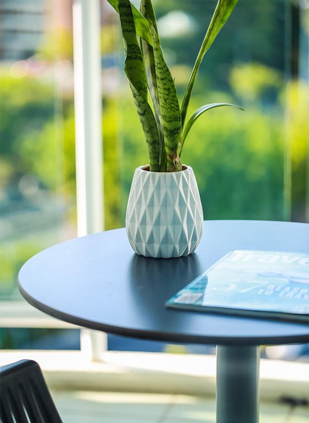 Kangaroo point accommodation executive suite plant table